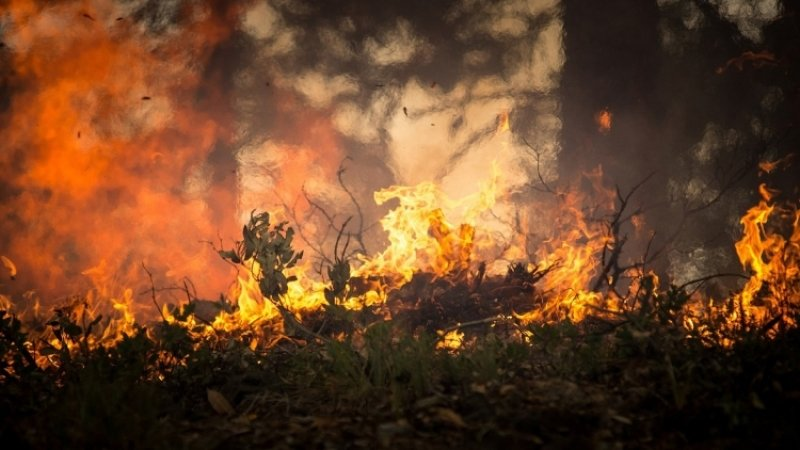 Режим ЧС из-за природных пожаров ввели в двух районах Приангарья