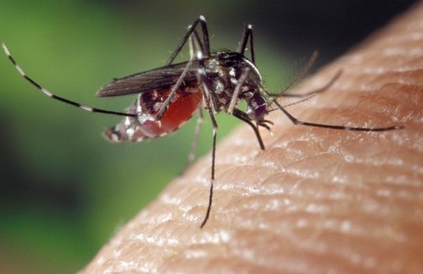 Пятнадцать петербуржцев подхватили лихорадку денге вТаиланде
