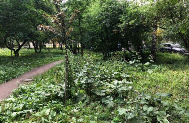 Петербуржцы просят спасти Яблоневый сквер
