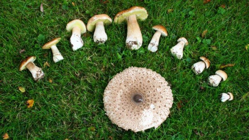 Диетолог рассказала о лечебных свойствах грибов