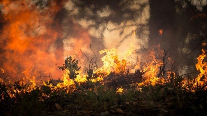 Сибиряки просят ввести в регионе режим ЧС из-за лесных пожаров