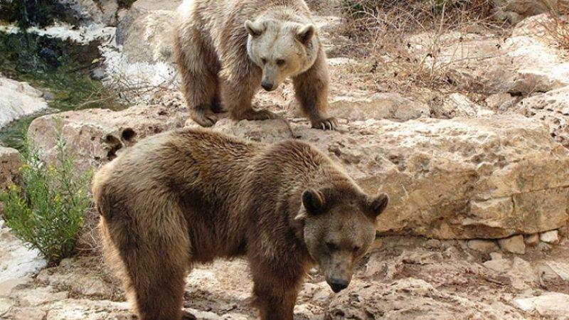 Несколько десятков медведей заблокировали туристическую тропу на Камчатке