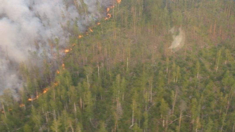 Бурматов назвал первой причиной лесных пожаров бездействие региональных чиновников
