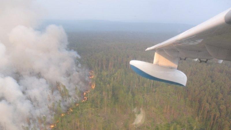 Площадь лесных пожаров в РФ в зоне активного тушения за сутки осталась прежней