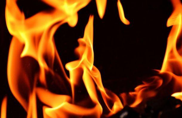 Пять кошек погибли при пожаре наБоровой