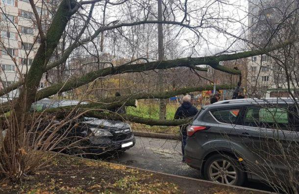 Сильный ветер повалил деревья наавтомобили насевере Петербурга