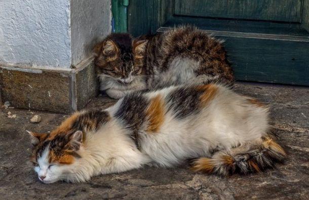 Смольный обратил внимание напроблему бездомных животных