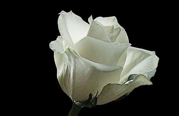 Миняйло вывели иззала суда при попытке передать белую розу