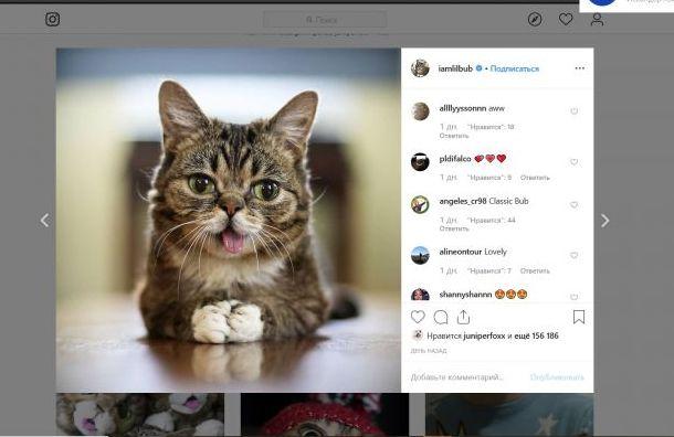 Самый популярный кот сгрустными глазами ивысунутым языком умер